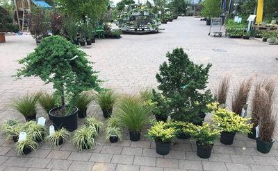 Lebendige Gartenplanung