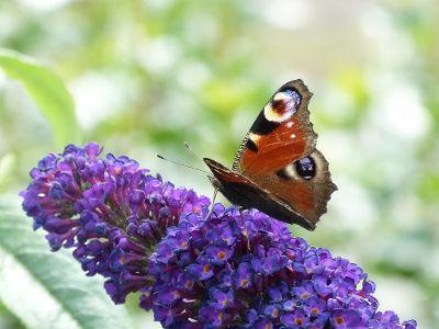 Schmetterlingsmagnete