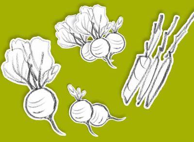 Die jungen Leckeren fürs Gemüsebeet