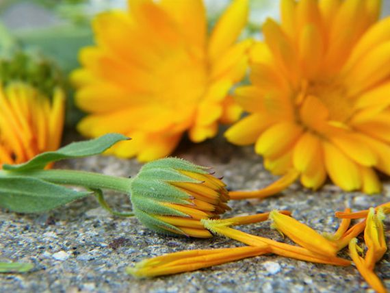 Für gepflegte Gärtnerhände