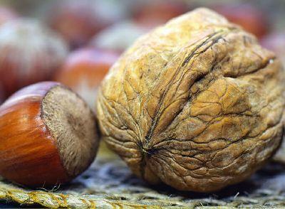 Obst, Beeren und Nüsse selbst ernten