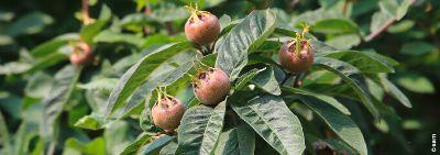 Fruchtgenuss pur