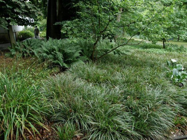 Gräser für den Halbschatten und Schatten