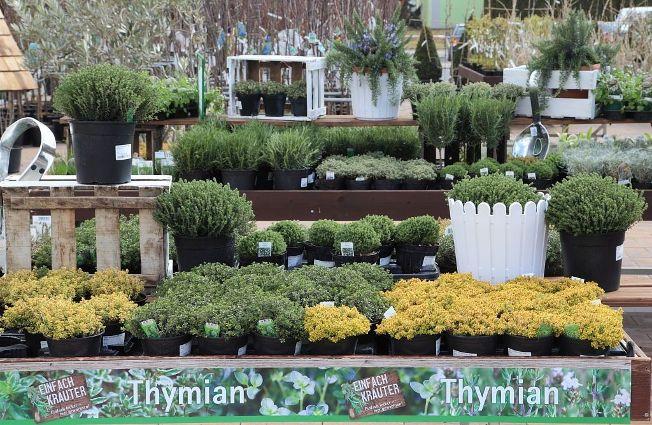 Spezial-Sortiment Thymian