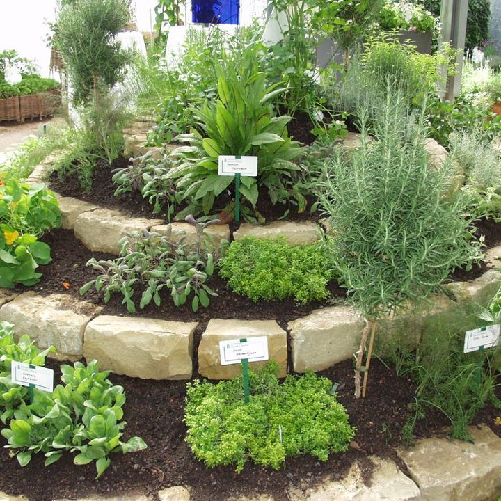 Würz, Heil- und Duftpflanzen