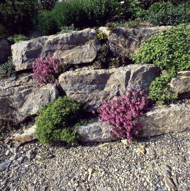 Steingartenstauden und Alpine