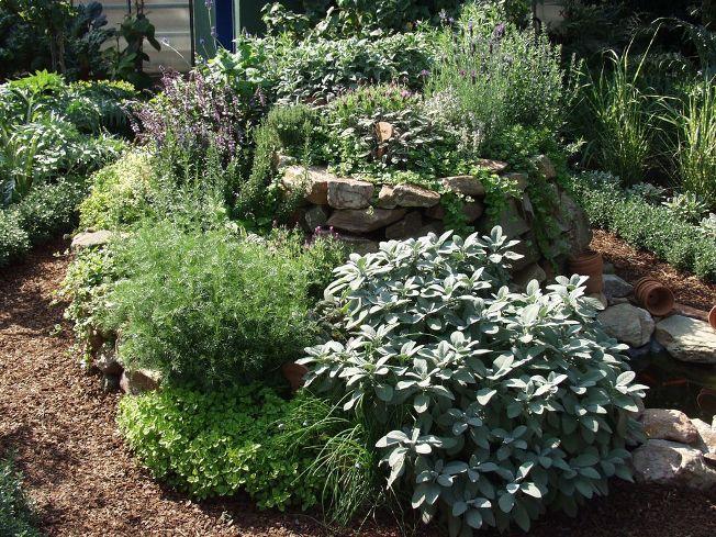 Kräuter und Duftpflanzen
