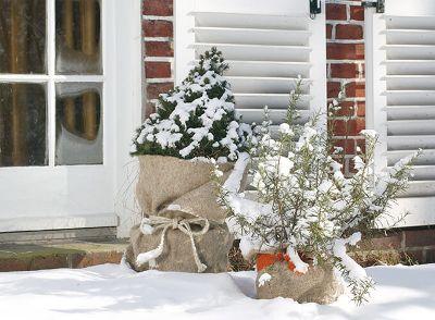 Winterschutz für bepflanzte Gefäße
