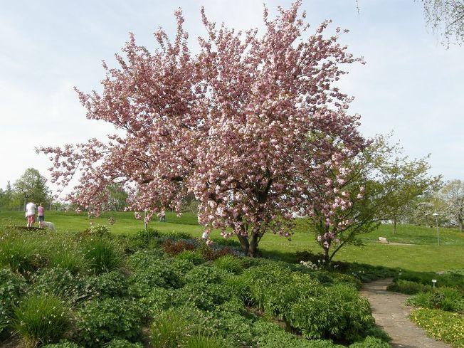 Kleinbäume 7 -15 m