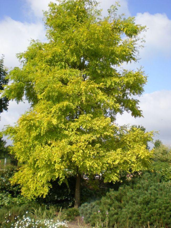 Mittelhohe Bäume 15 -20 m