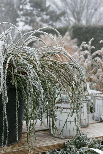 Winter-Öffnungszeiten