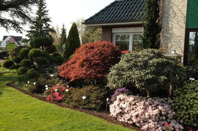Begeleitgehölze zu Rhododendron