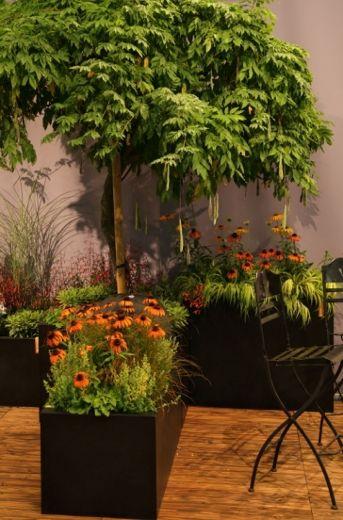 Winterharte Gefäßgärten auf Terrasse und Balkon