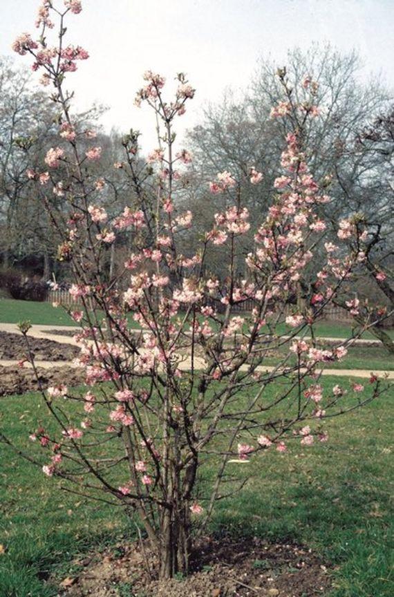 Ein starker Frühlingsauftritt