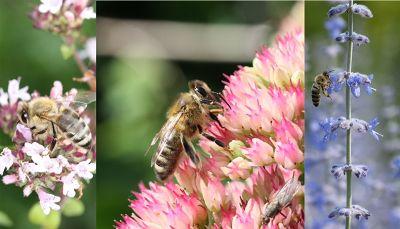 Schlaraffenland für Bienen