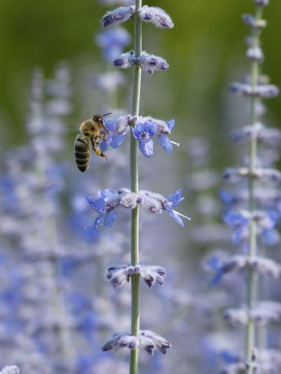 Sterneküche für Bienen