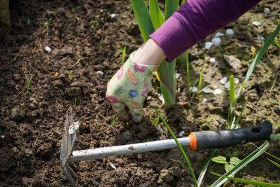 Die Gartenarbeit: Stauden