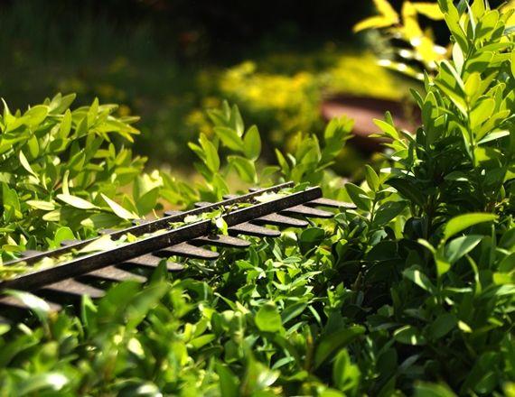 Die Gartenarbeit: Gehölze