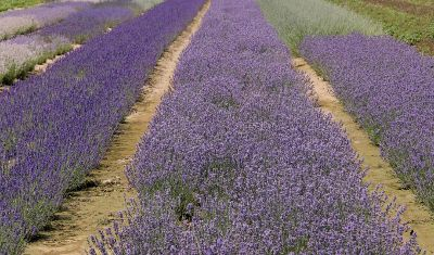 Europa: provençalisches Ambiente
