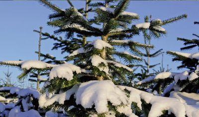 Christbaumverkauf und Santa-Service