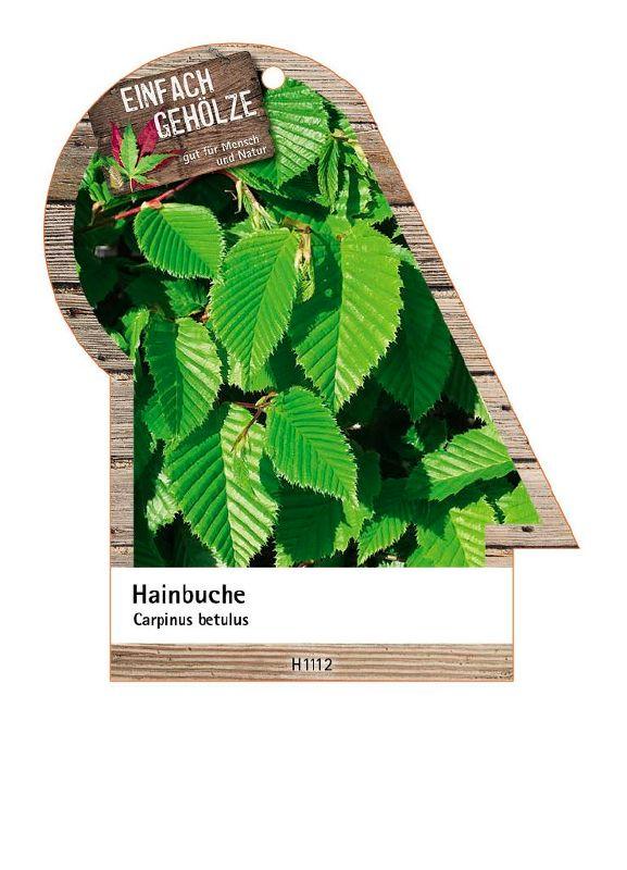 Carpinus betulus, Hainbuche, Weißbuche