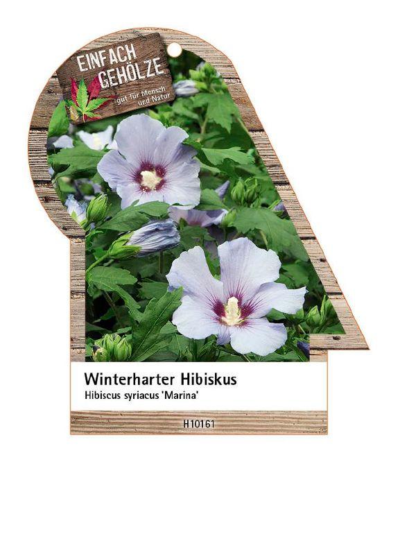 Hibiscus syriacus 'Marina', Strauch-Eibisch