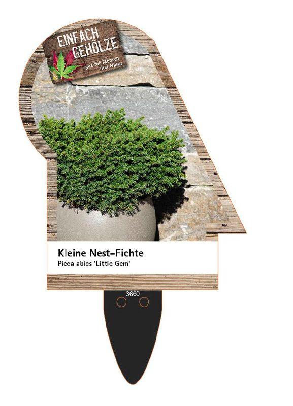 Picea abies 'Little Gem', Kleine Nest-Fichte