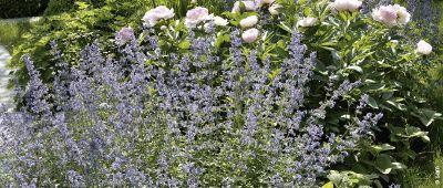 Duftgärten: eine Wohltat für die Sinne