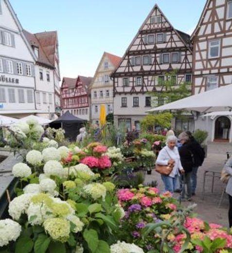 Leonberger Altstadtgarten